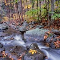 Favorite Trails: Lynn Camp Prong