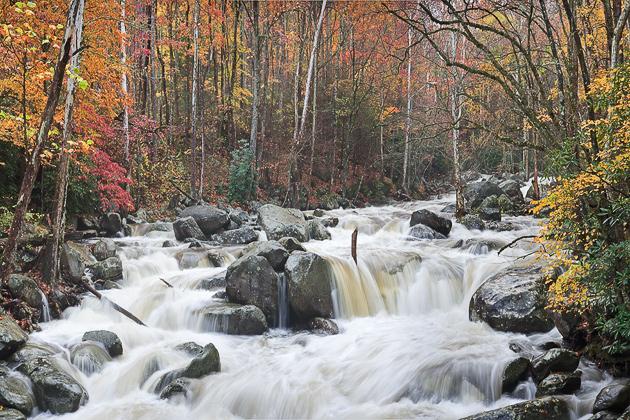 Featured Photo: Wild Autumn