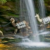 Favorite Trails: Grotto Falls