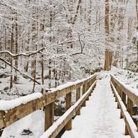 Featured Photo: Winter Footbridge