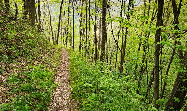 Favorite Trails: Kanati Fork and Thomas Divide
