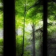Wordless Wednesday: In the Deep Dark Woods