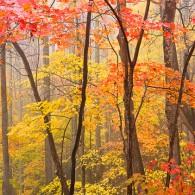 Featured Photo: Heart of Autumn