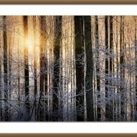 Wordless Wednesday: Winter Light