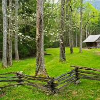 Featured Photo: Dogwood Home