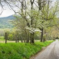 Springtime on Sparks Lane