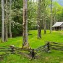 Dogwood Homestead