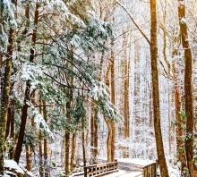 Into the Winter Woods